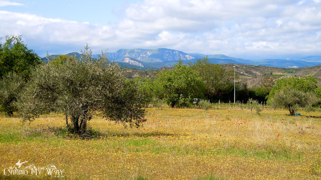 Photo of poppies in the field, trees, grass, mountains, outside Irache, Spain, Camino de Santiago