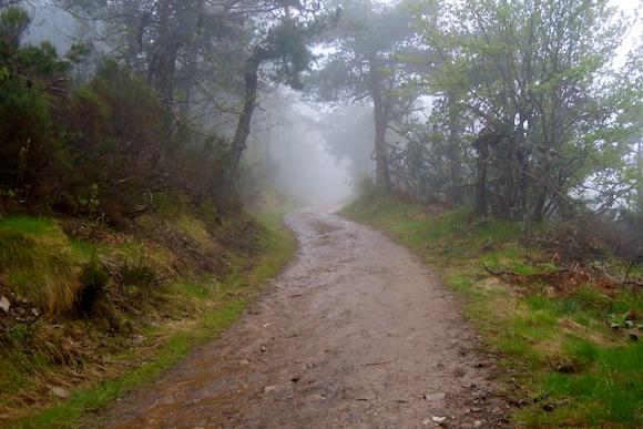 Path Cebreiro, Galicia, Camino Frances, gravel, trees, shrubs, grass, fog