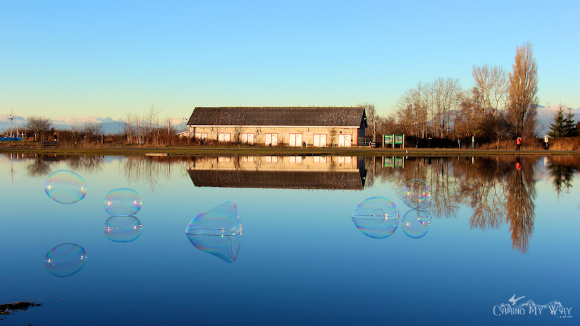 pond bubbles Garry Point Park Steveston Richmond BC